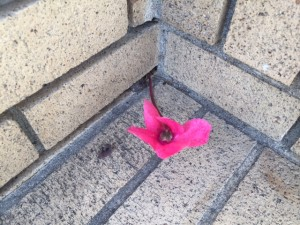 I found this solo flower coming up a porch, while on the broker tour. Shows just how much rained we've had!